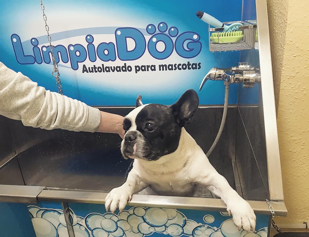 autolavado de perro