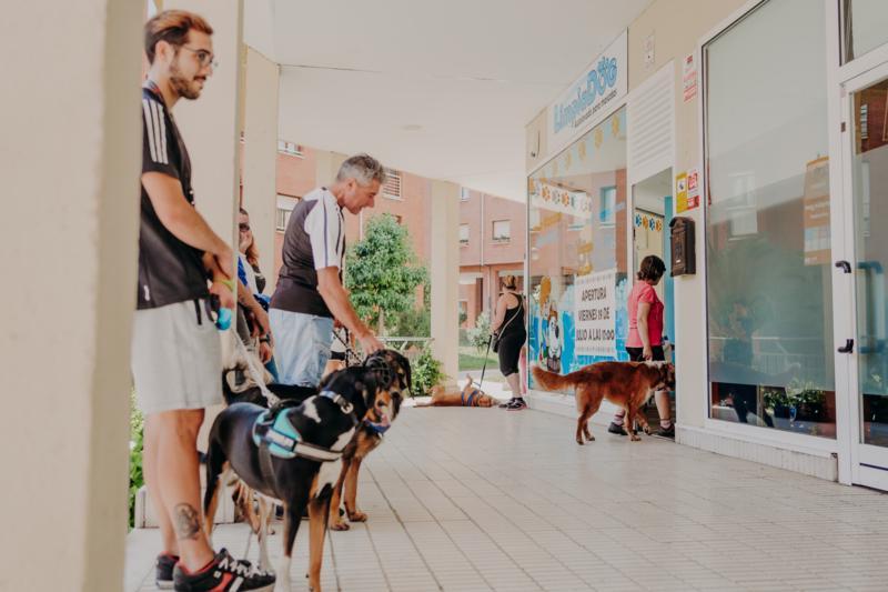 Limpiadog autolavado mascotas